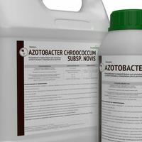 Биомасса Azotobacter chroococcum